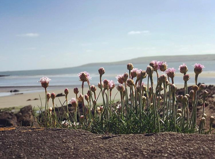 Photo by Eimear Fitzgearld _Cork Uplifting News Summer Solstice GoodDayNews